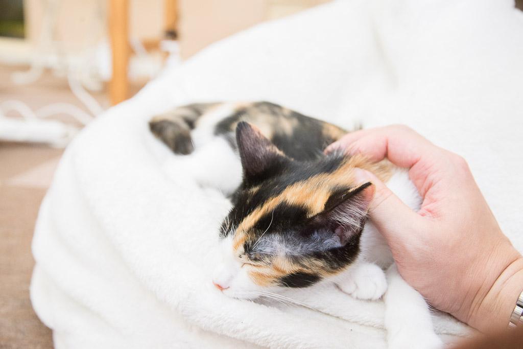 猫カフェねころびの子ネコが寝てるところ