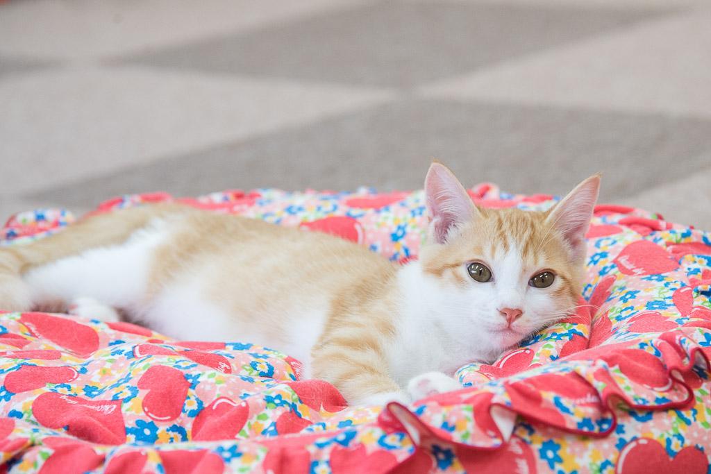 猫カフェねころびの子ネコその6