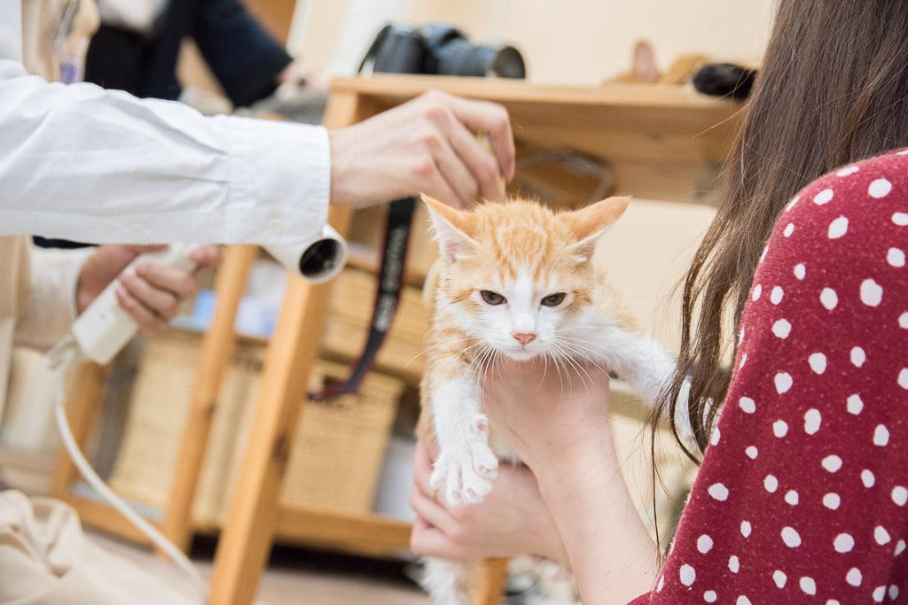 猫カフェねころびで猫がドライヤーで乾かされてるところ