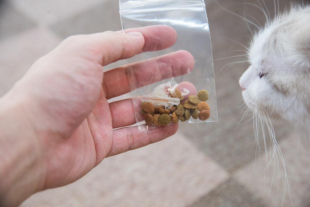 猫カフェねころびの無料おやつ