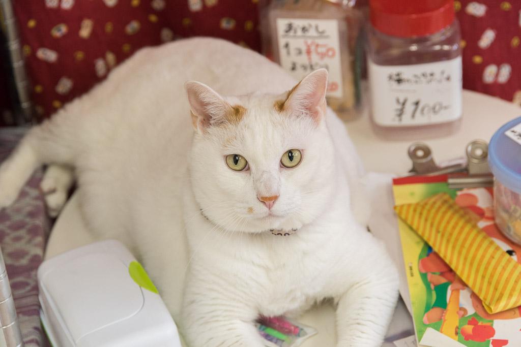 猫カフェ・ねこ園の猫