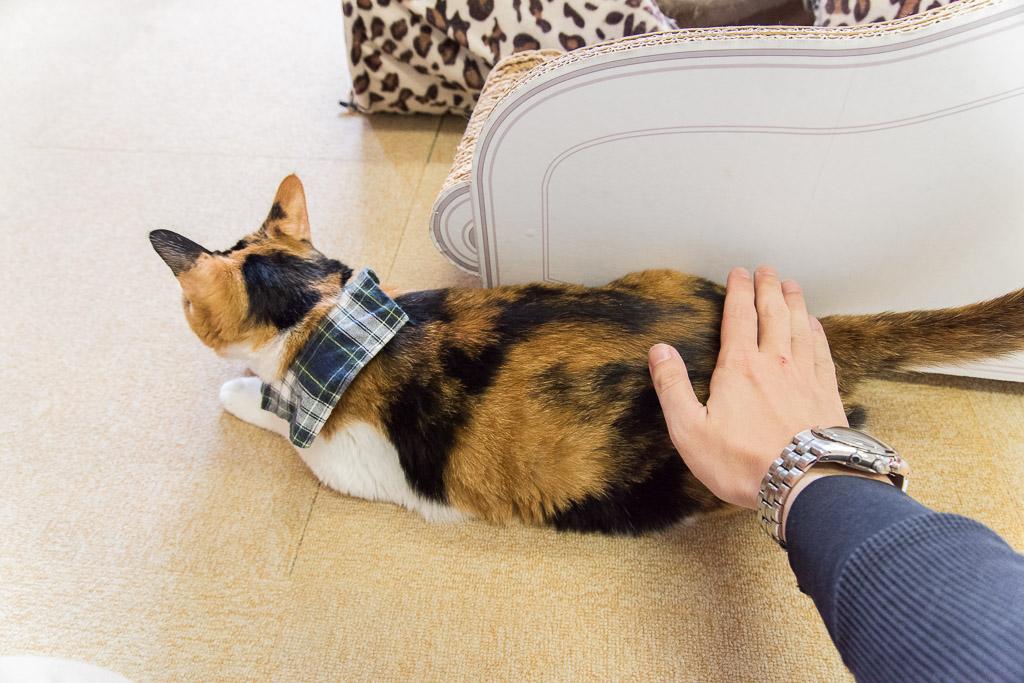 猫カフェ・ねこ園の猫を撫でる