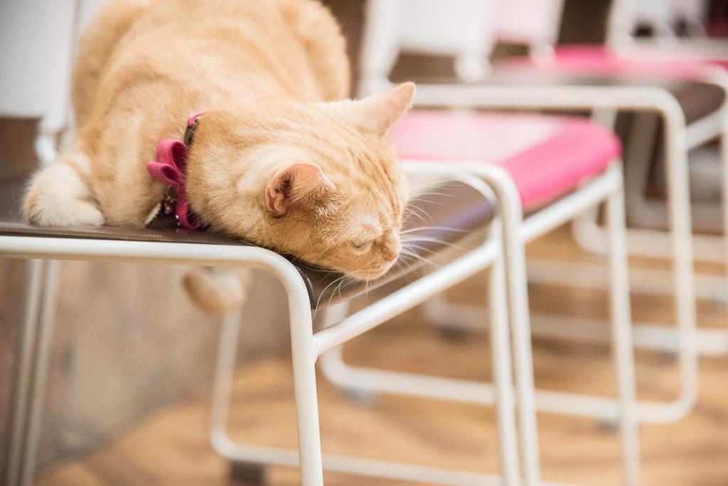 猫カフェ・ねこぶくろのねこ2