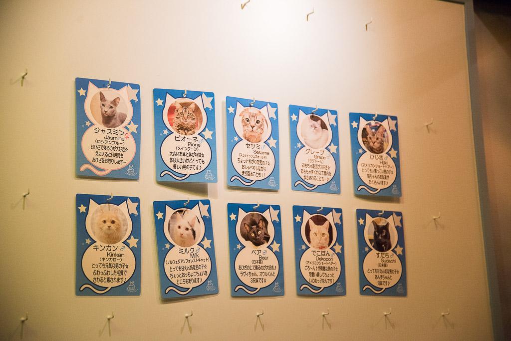 猫カフェ・ねこぶくろの猫たちの紹介