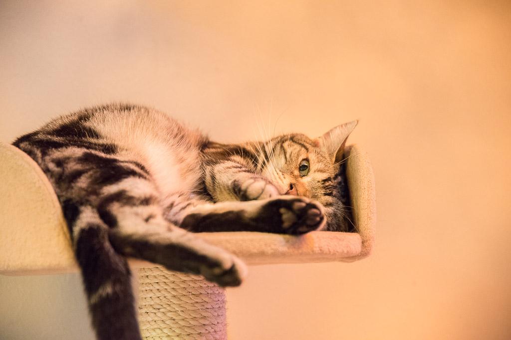 猫カフェ・ねこぶくろのねこ3