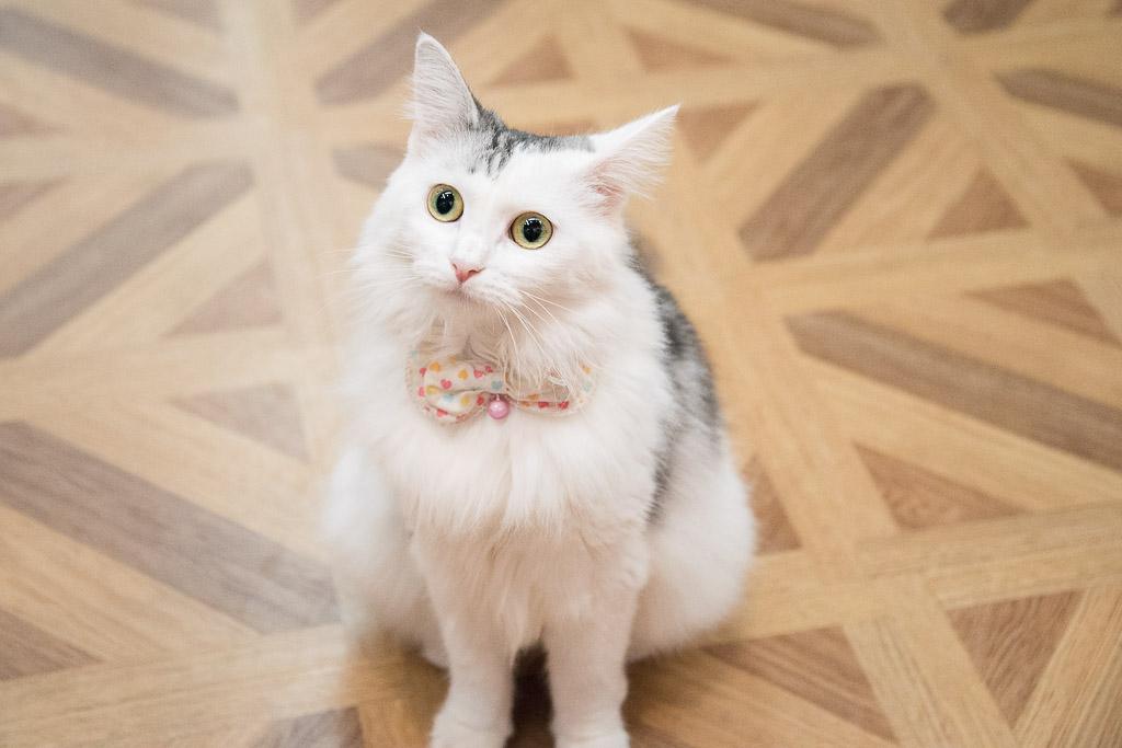 目がまんまるな猫
