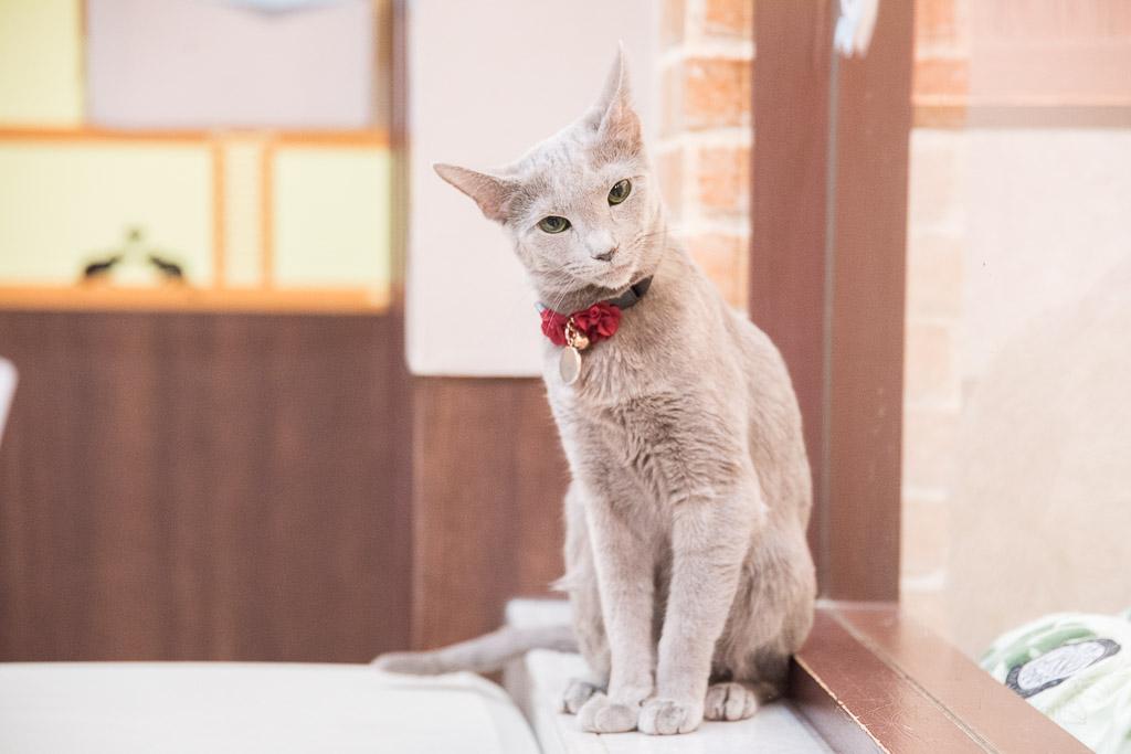 猫カフェ・ねこぶくろのねこ5