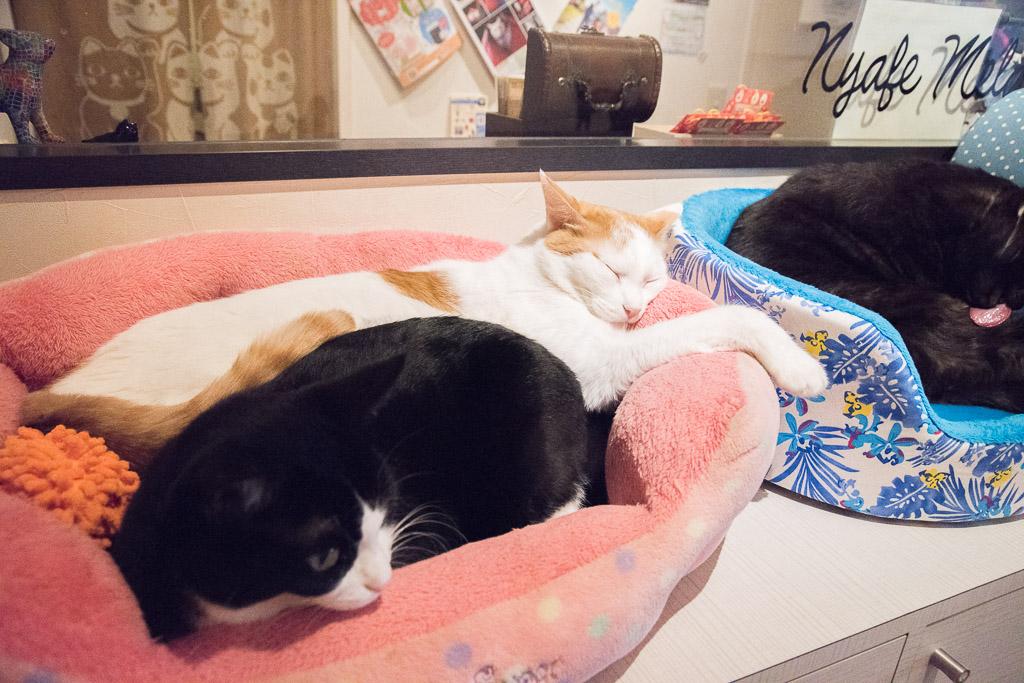 猫カフェ・ニャフェ・メランジェの猫7