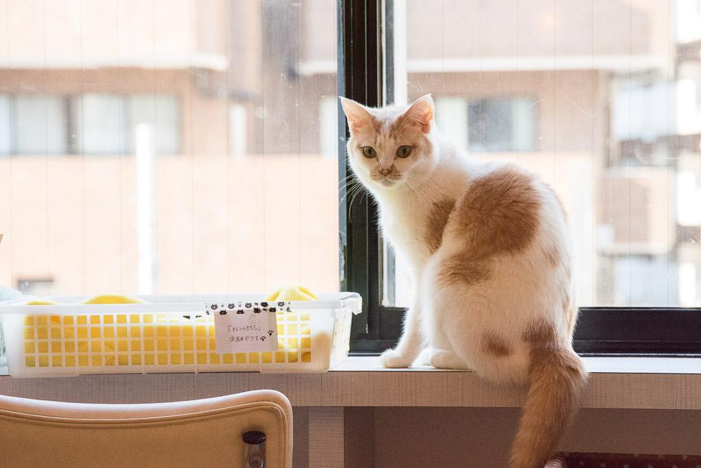 猫カフェ・ニャフェ・メランジェの猫2