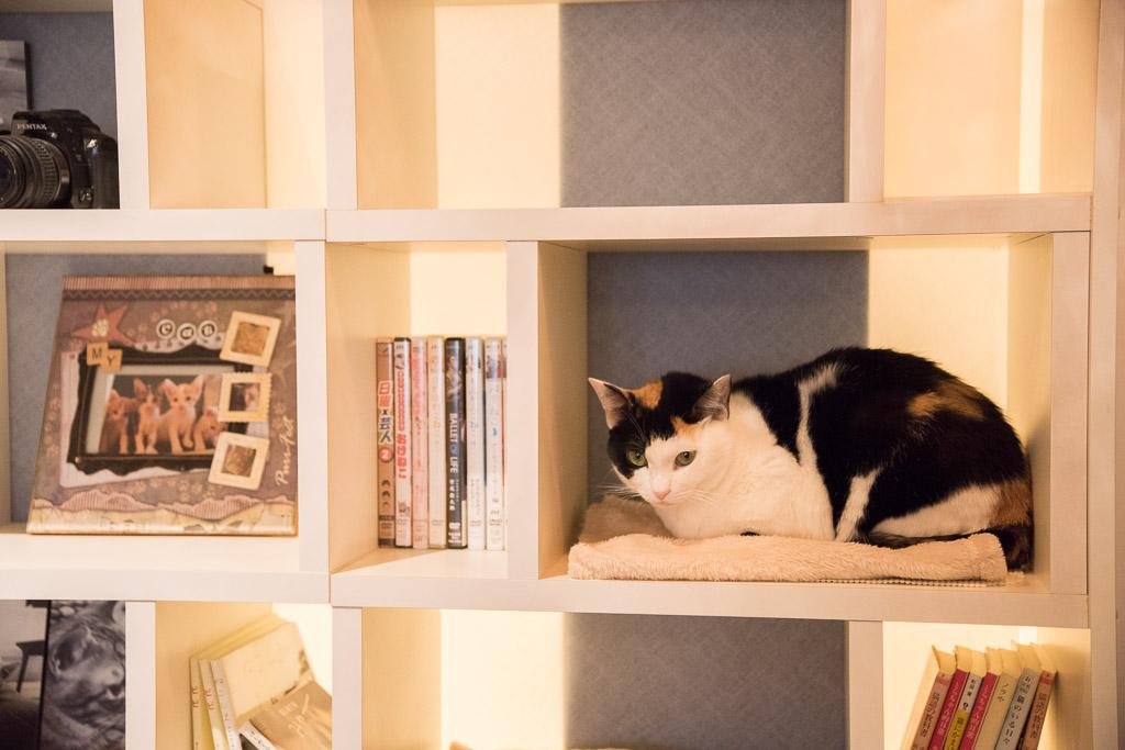 猫カフェ・ニャフェ・メランジェの猫8