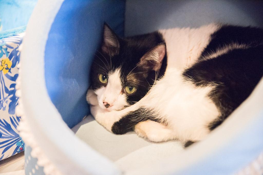猫カフェ・ニャフェ・メランジェの猫3