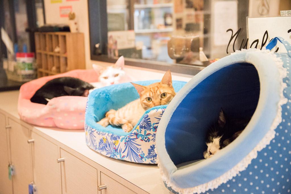猫カフェ・ニャフェ・メランジェの猫4