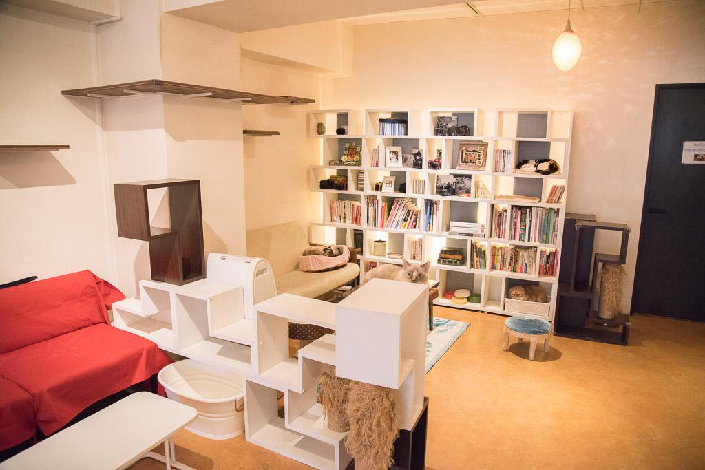 猫カフェ・ニャフェ・メランジェのおしゃれな家具