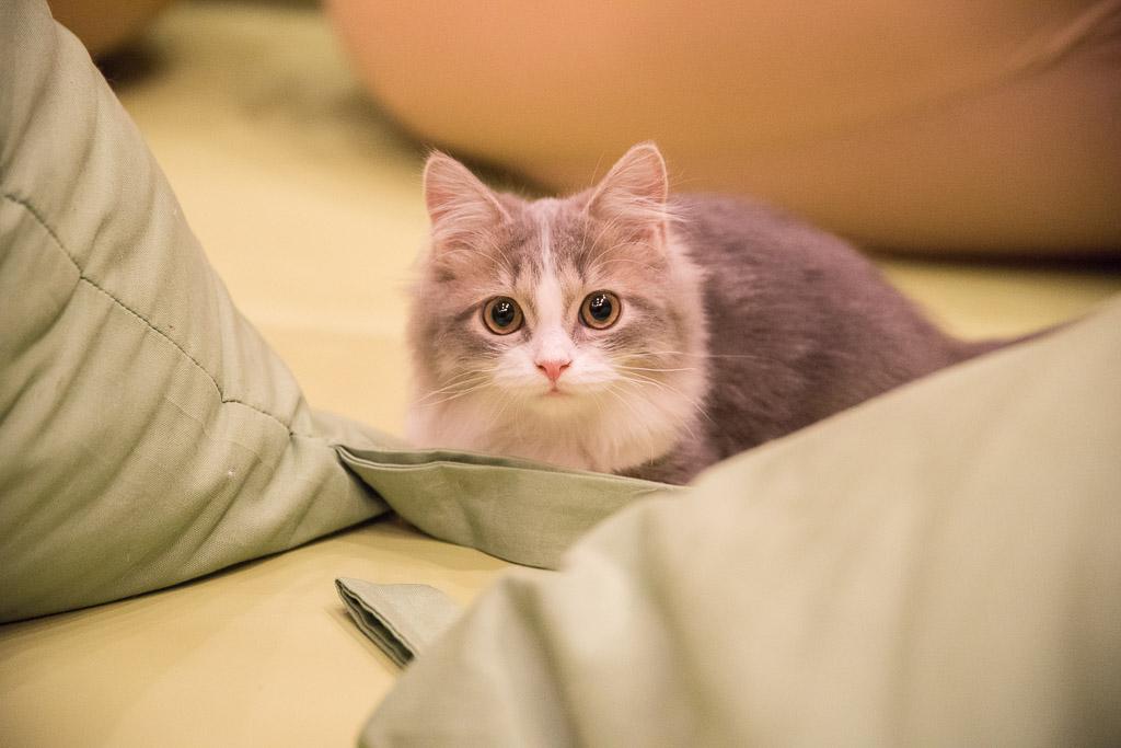 愛猫が突然逝ってしまった…前触れもなく起こる猫 …