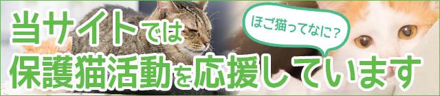保護猫活動の説明
