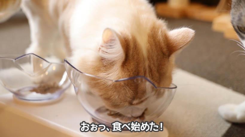 和の究みキャットフード 1歳から飽きやすい成猫用をやっと食べ始めた猫
