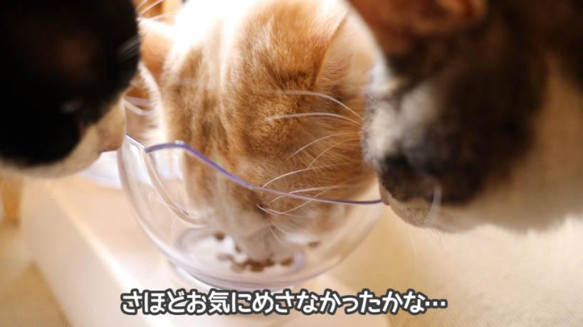 和の究みキャットフード 1歳から飽きやすい成猫用はぜんぜん食べられない