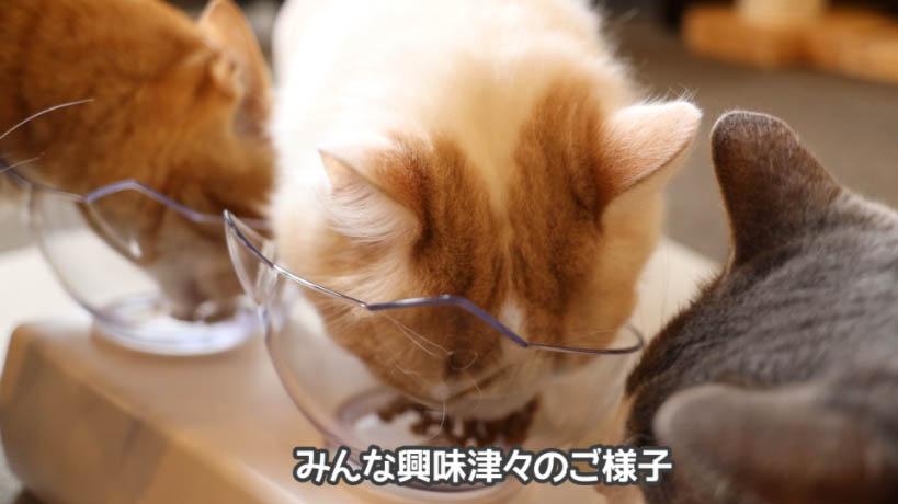 ほかの猫たちも和の究みキャットフード 1歳から飽きやすい成猫用に興味はある様子