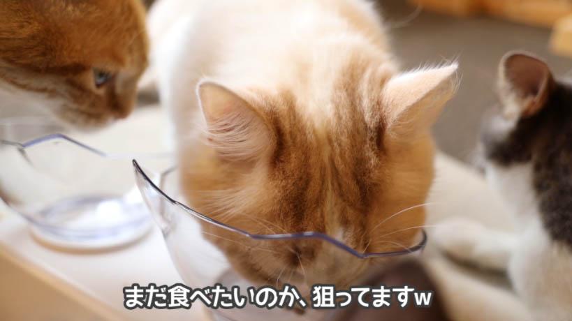 和の究みキャットフード 1歳から飽きやすい成猫用を好きな猫も1匹だけいた
