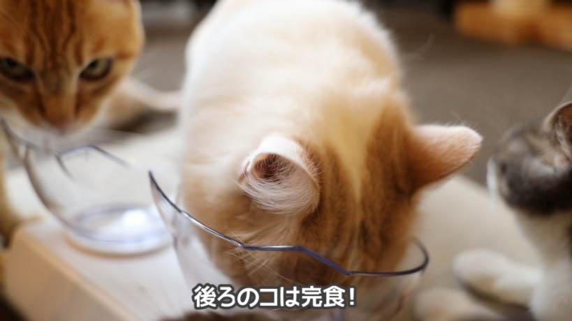 いちおう、時間が立つと猫たちもしょうがなく食べて完食した