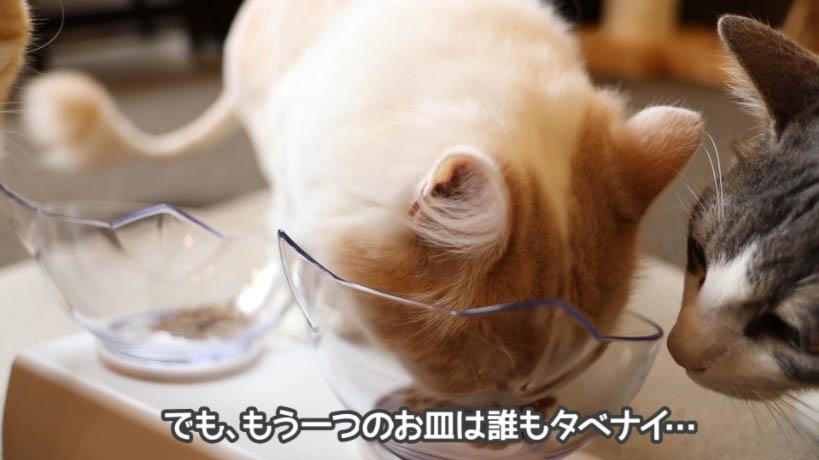 和の究みキャットフード 1歳から飽きやすい成猫用はぜんぜん猫に受けない