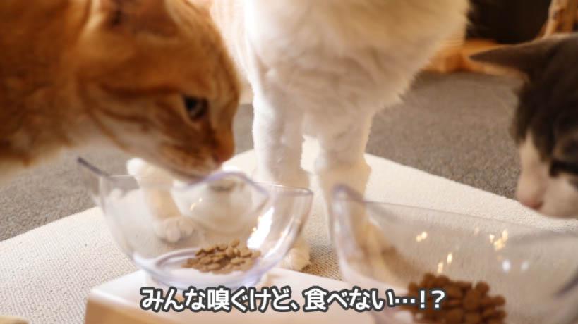 和の究みキャットフード 1歳から飽きやすい成猫用は猫が食べない