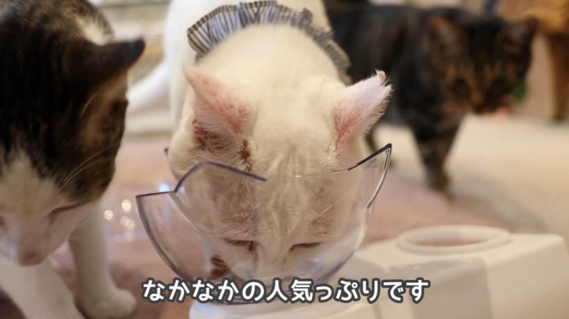 COMBO猫下部尿路の健康維持は猫に人気がある