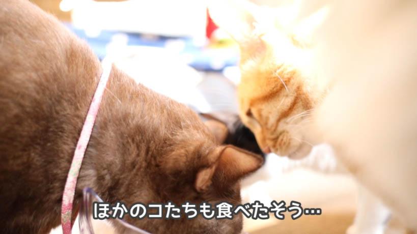 シーバDUO 贅沢シーフード味セレクションを食べれてない猫たちも食べたそう