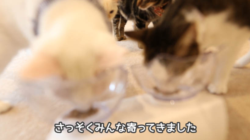モンプチナチュラル天然お魚の贅沢に猫が寄ってくる
