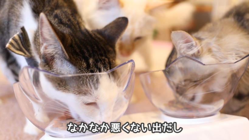 モンプチ毛玉ケア 5種のブレンドを食べ始める猫たち