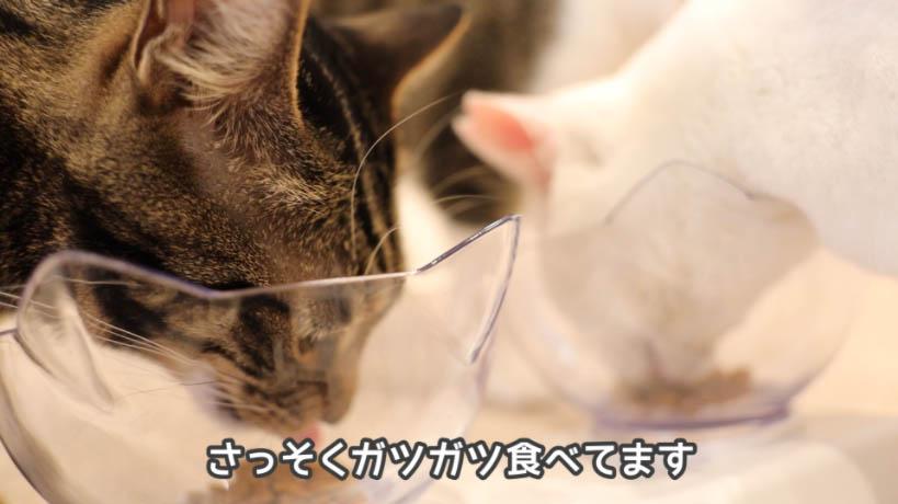 モンプチナチュラル新鮮若鶏の贅沢を食べる猫たち