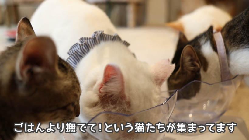 銀のスプーン三ツ星グルメお魚レシピよりも撫でて欲しい猫たち