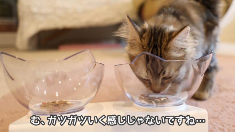 COMBO子ねこ用ミルクチップ添えはあまり猫の評判が良くない
