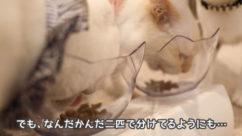 和の究み鰹だし香るみそ汁風味はそんなに猫たちが大好きという感じでもない