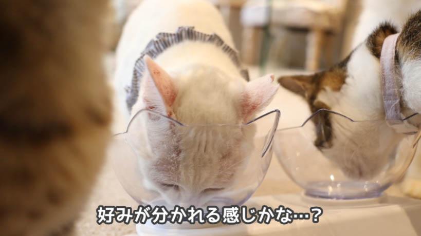 銀のスプーン三ツ星グルメお魚レシピはあんまり猫たちの評判は良くなかった