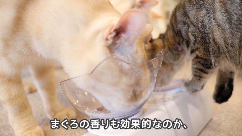 シーバDUO香りのまぐろと味わい鶏ささみ味はまぐろの香りが強い