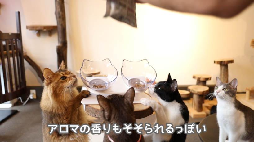 ロイヤルカナン アロマエクシジェントの香りにつられる猫たち