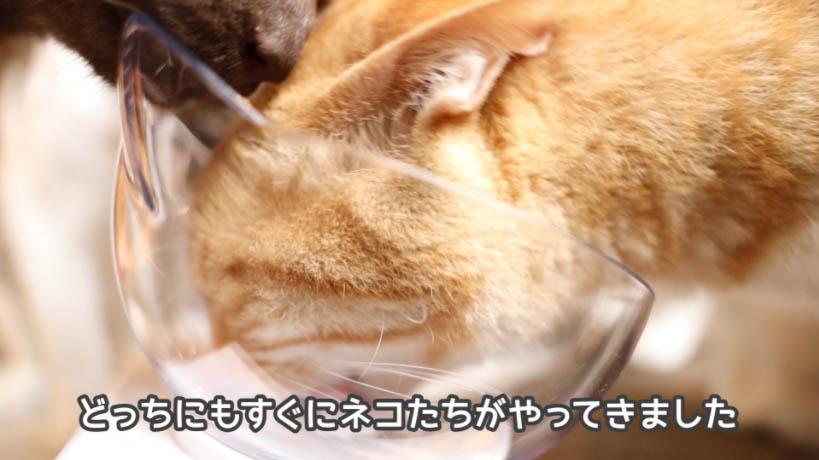 シーバDUO 贅沢シーフード味セレクションに集まる猫たち