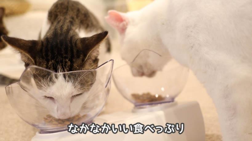 モンプチナチュラル新鮮若鶏の贅沢を食べる猫たちの食べっぷりはいい