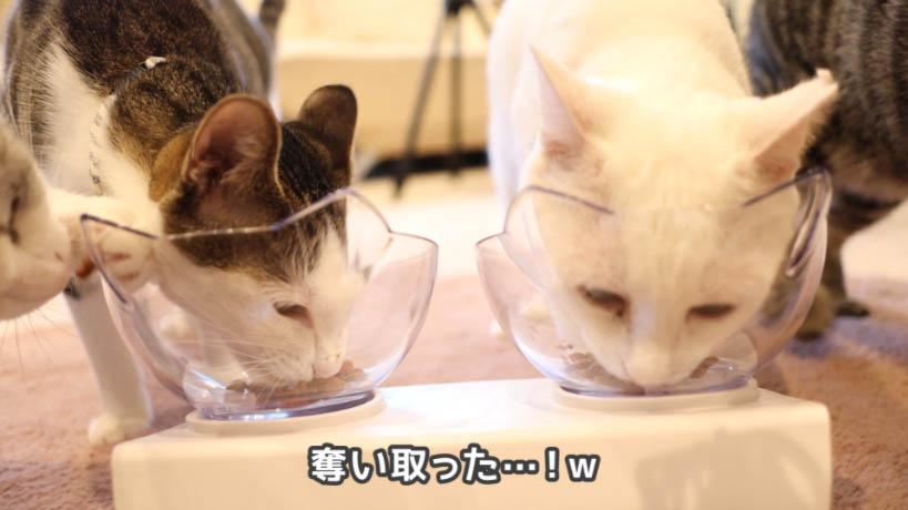 モンプチ 7種のブレンド かつお節入りを奪い取る猫