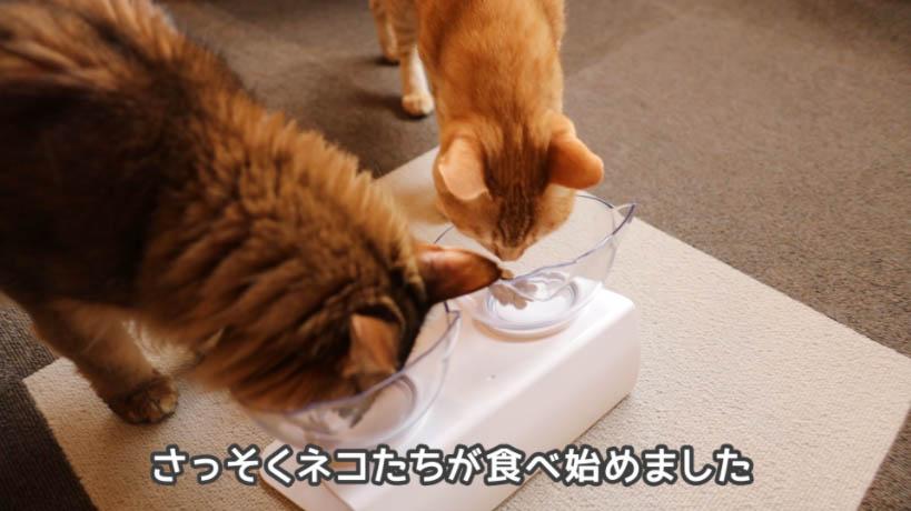 モンプチ クリスピーキッス贅沢バラエティパックを食べる猫たち
