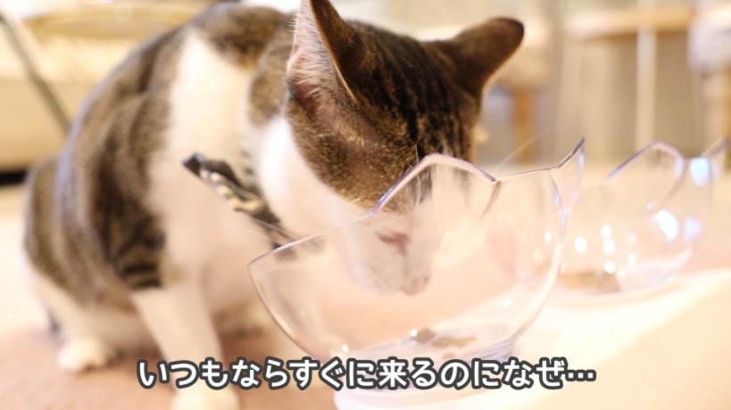 モンプチ クリスピーキッス シーフードは猫に不評
