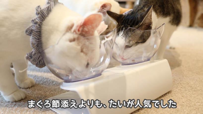 銀のスプーン三ツ星グルメお魚レシピはまぐろよりも鯛が人気