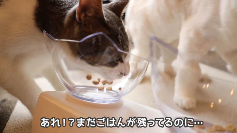 ピュリナワン グレインフリー 白身魚がまだ残ってるけど飽きた猫