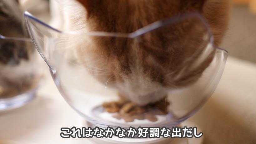 ピュリナワン グレインフリー 白身魚は猫たちの最初の食いつきが良い