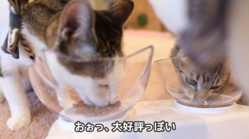 モンプチ7種のブレンドは猫たちに好評