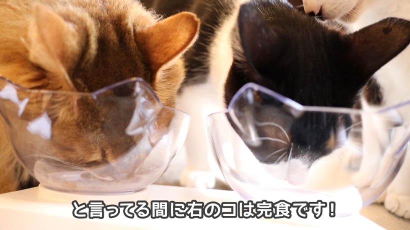 ロイヤルカナン セイバーエクシジェントを食べてた右の猫は完食