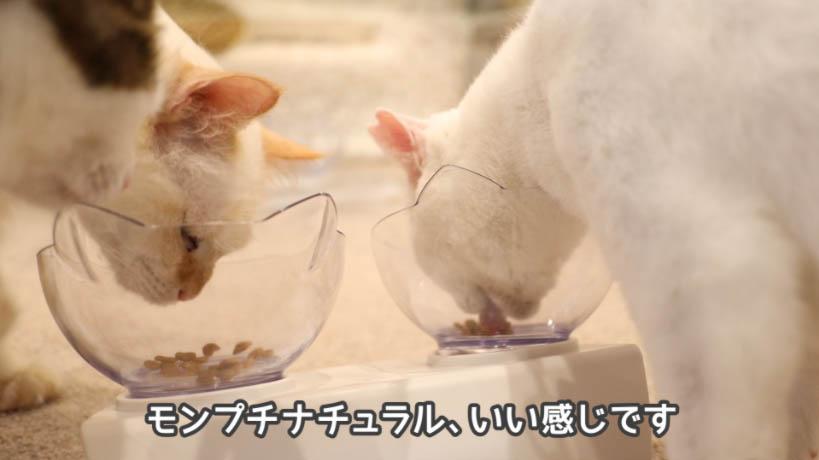 モンプチナチュラル新鮮若鶏の贅沢は猫たちの食いつきが良かった