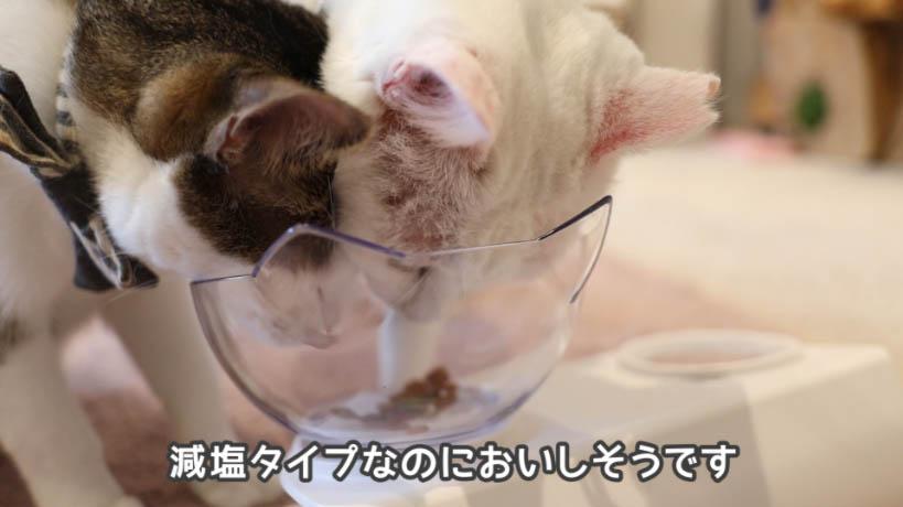 COMBO猫下部尿路の健康維持は減塩タイプのキャットフードとしては人気があるほう
