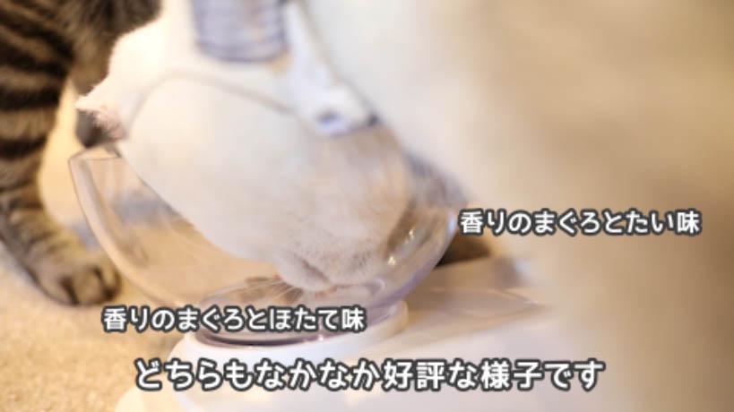 シーバDUO香りのまぐろ味セレクションのまぐろ・ほたて味とまぐろ・たい味の食べ比べ